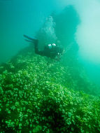 Diving the Pinnacle, St. Abbs Head