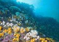 A beautiful reef off St. Abbs Head