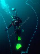 String Jelly - Apolemia uvaria