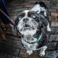 Gizmo, Sheringham 40's weekend