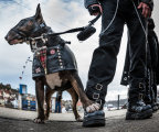 Whitby Goth Dog