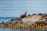 Seal_Colony_Kenai_Fiords