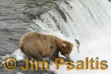 Salmon_Brooks_Falls