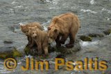 Mother_with_cubs_Brooks_Falls