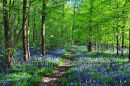 Bluebell Wood, West Sussex