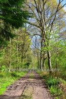 Coldwaltham Woods