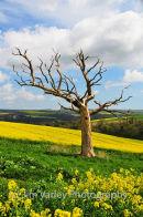 Bury Hill tree