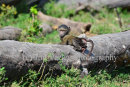 Baby Baboon On Tree