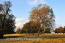 Petworth Park in Autumn