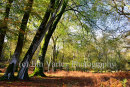 Bolderwood, The New Forest, Autumn 2014