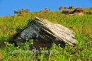Rock, Lynton, North Devon