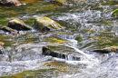 River Barle, Somerset