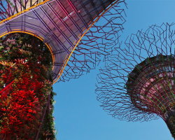 Super Tree Grove, Gardens by the Bay