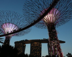 Super Tree Grove, Gardens by the Bay with the Marina Bay Sands Hotel in the background