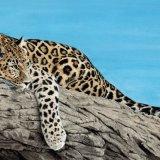 Wild Cat Series - Jaguar