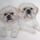 """""""You have captured the characteristics of the dogs brilliantly."""""""