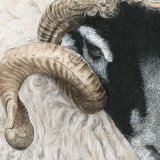 Tup Cropped