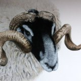Tup - SOLD