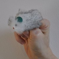Boris the mouse