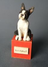 Boston Terrier Miniature.