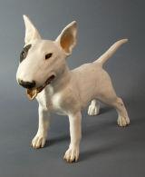 Bull Terrier 2012