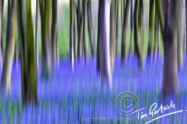 abstract spring bluebells