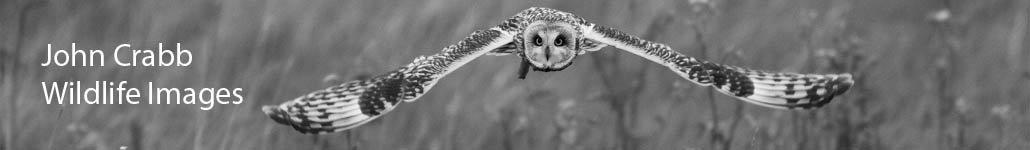 John Crabb Wildlife Images