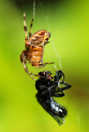 fly and spider