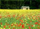 Provence field