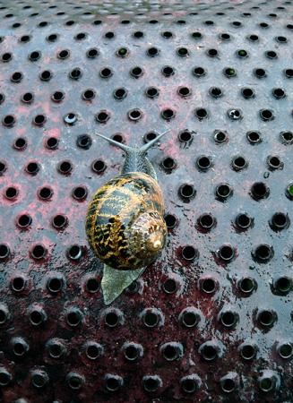 snail metal