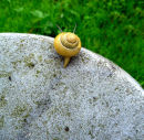 snail on edge