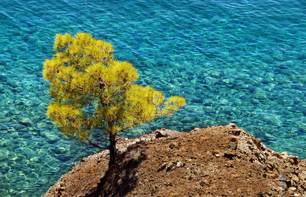 Tree by the sea