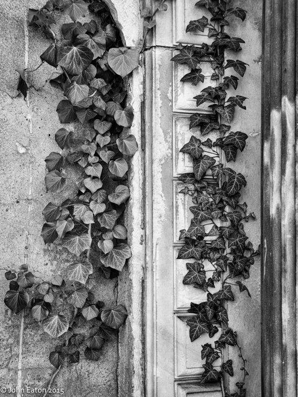 Jewish Cemetery #5