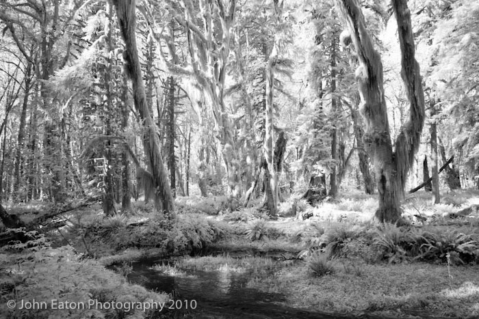 Rain Forest #1