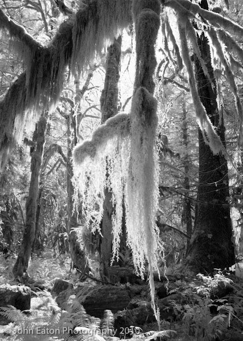 Rain Forest #2