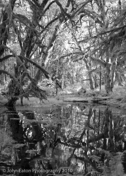 Rain Forest #3