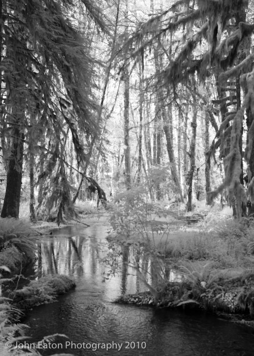 Rain Forest #4