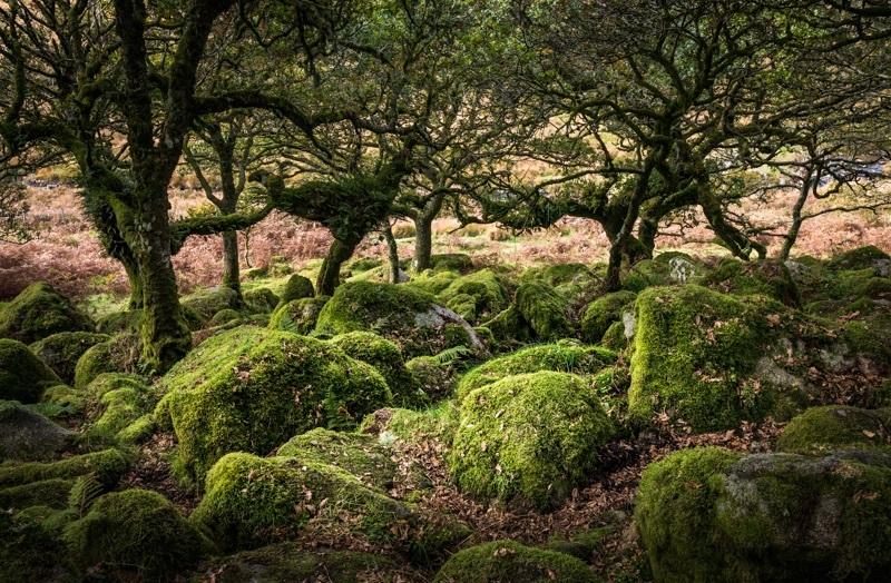 Wistman's Wood #3