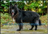 Pet dog photographer ashford kent