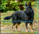 pet-photography-Ashford- kent