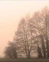 Early morning walker