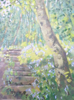 Bluebells in Little Carterhall Wood,Charnock,Sheffield