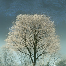 0090 Borrowdale Stonethwaite Hoar Frost