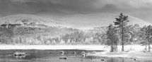 1731 Loch Morlich