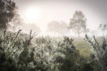 3934 Dreamy Lowland Heath