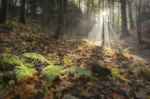 4930d Strid Wood Autumn Panorama