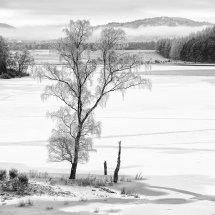 5701 Frozen Birch