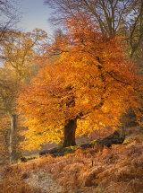 9317 Ullswater Autumn Glow