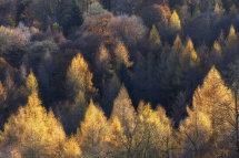 9940 Manesty Woods Borrowdale