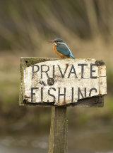 1980 Kingfisher